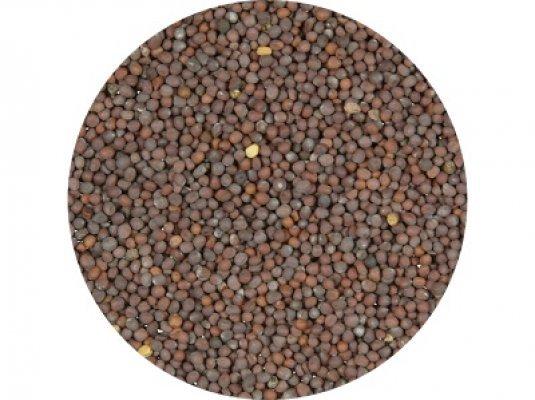 Hořčice černá